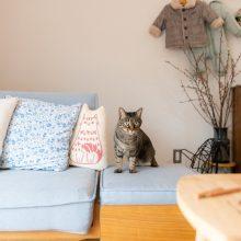 ヒトも猫も快適な家2