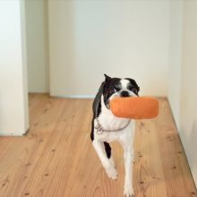愛犬と楽しく暮らす家。( ベーシック 3.0×4.0 高知市介良 )0