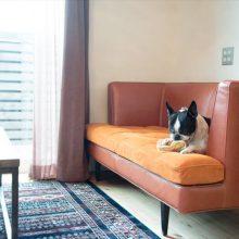 愛犬と楽しく暮らす家。( ベーシック 3.0×4.0 高知市介良 )1