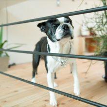 愛犬と楽しく暮らす家。( ベーシック 3.0×4.0 高知市介良 )2