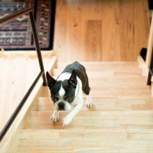 愛犬と楽しく暮らす家。( ベーシック 3.0×4.0 高知市介良 )3