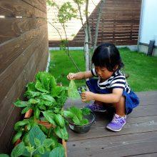 家庭菜園をタノシム