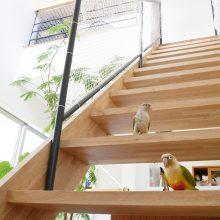 階段はインコの遊び場
