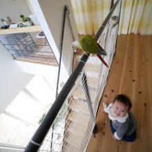 鳥も子供も楽しいD'Sのお家