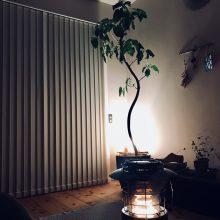 ストーブと植物