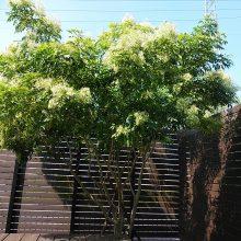私の好きな木