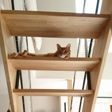 階段からこんにちは