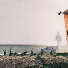 チューリップが咲いた。
