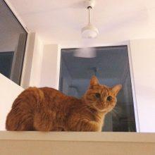 猫もオキニイリの場所