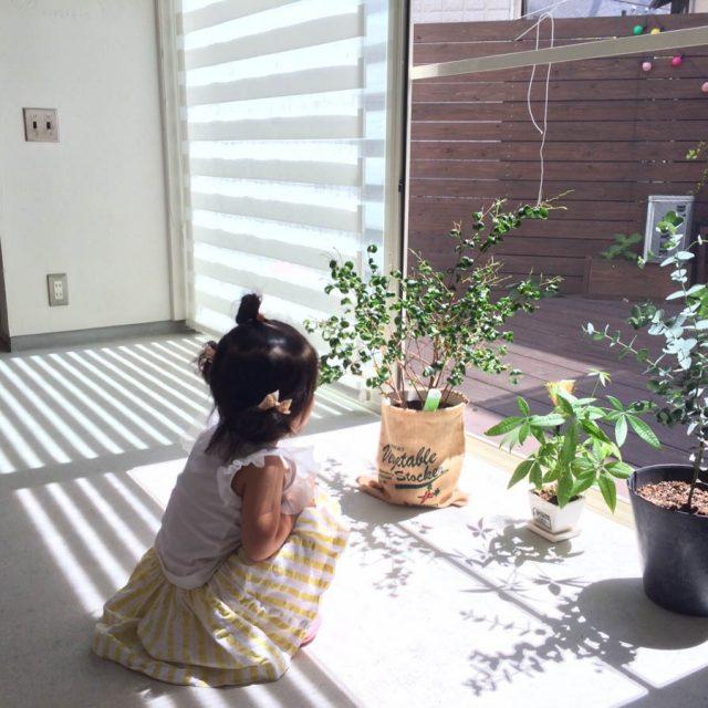 我が家のグリーンと一緒に日向ぼっこ(^_-)-☆ 気持いいねぇ~